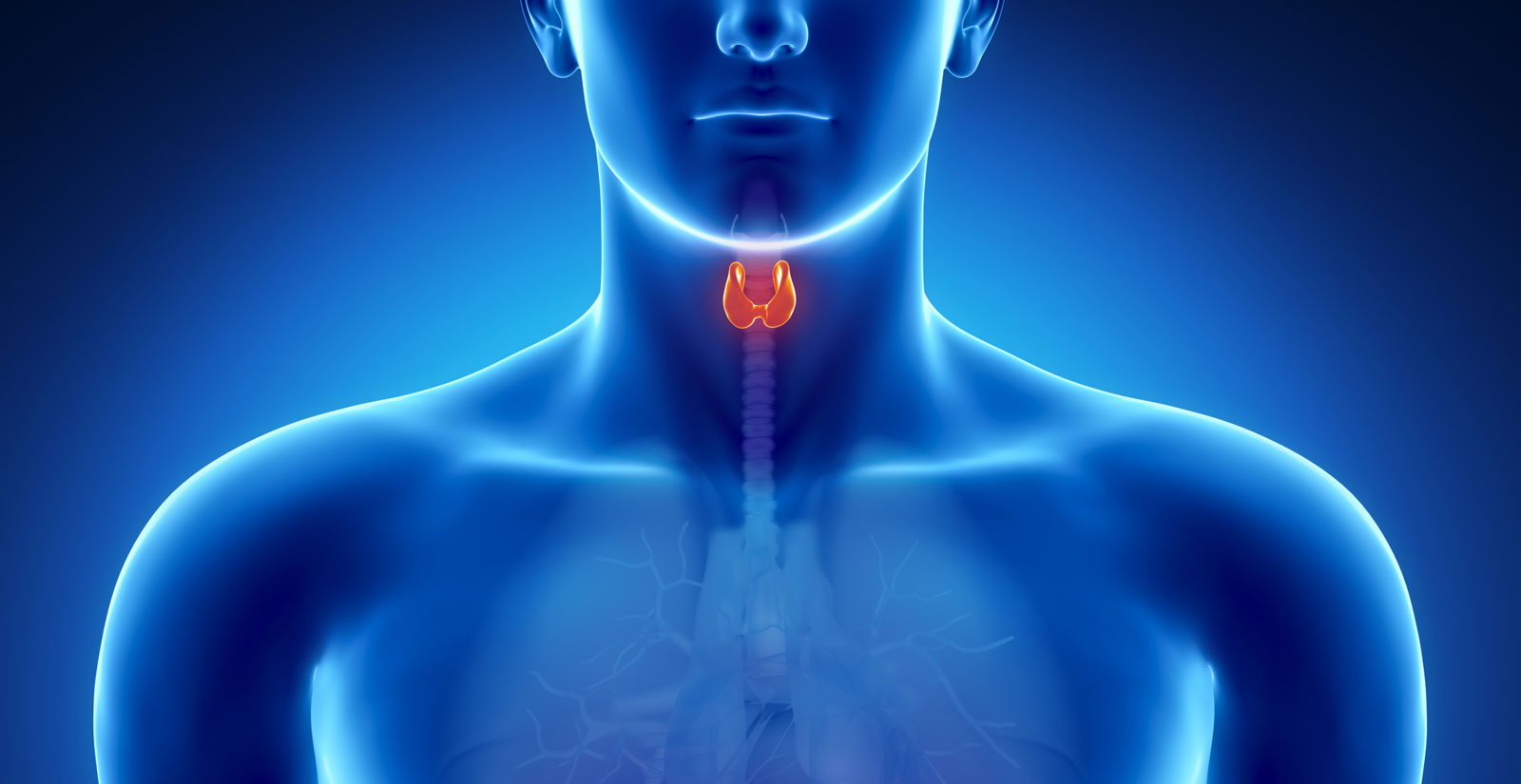 banner-thyroid